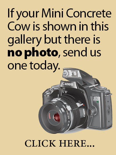 If your Mini Concrete Cow is shown in this gallery but there is no photo, send us one today. Click here...